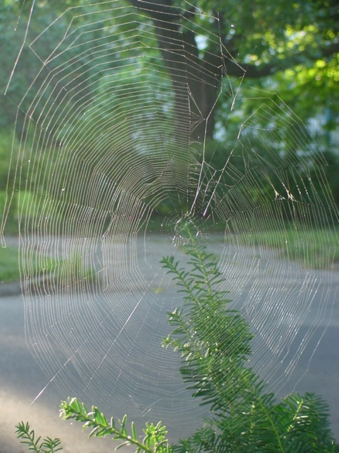 Spider Architecture