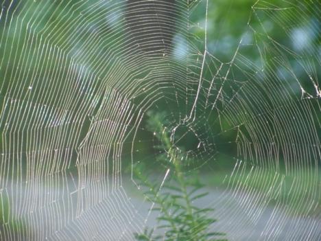 Spider Architecture 2