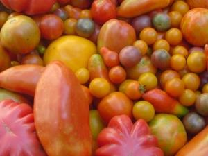 Tomato Basket 2