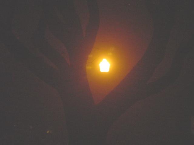 mist-ical-night