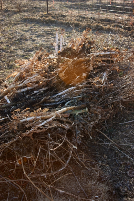 new-compost-pile