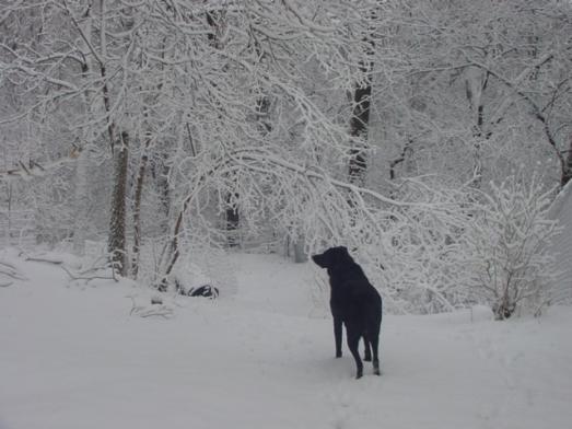 april-snow-2009