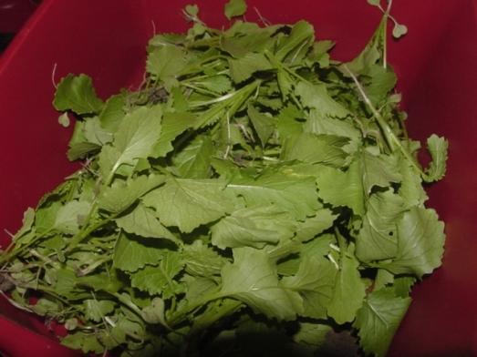 broccoli raab thinnings