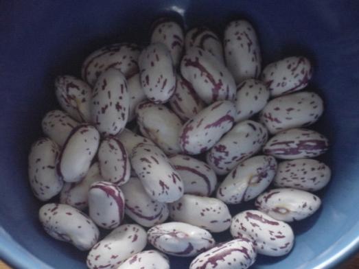 Bingo shell beans 2