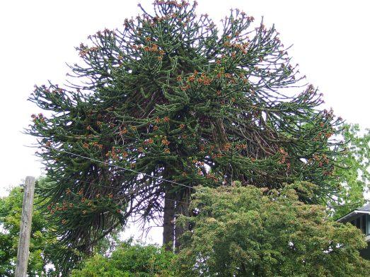 Spiky tree