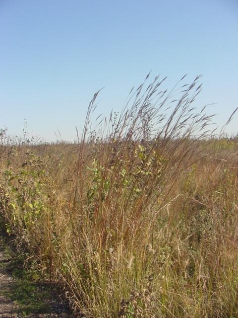 Big Bluestem--Spirit Mound Historic Prairie