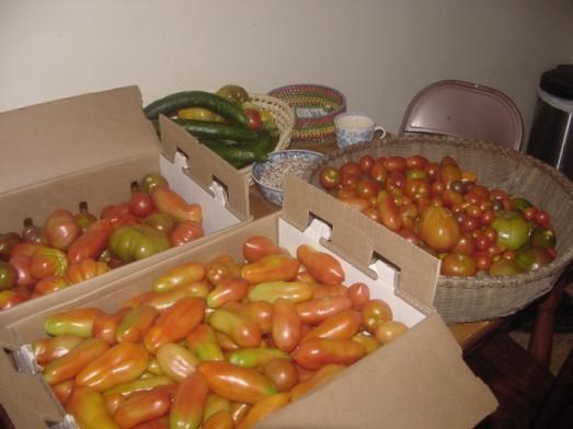 Saucy Tomatoes