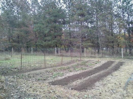 Cleared-out Northeast Garden