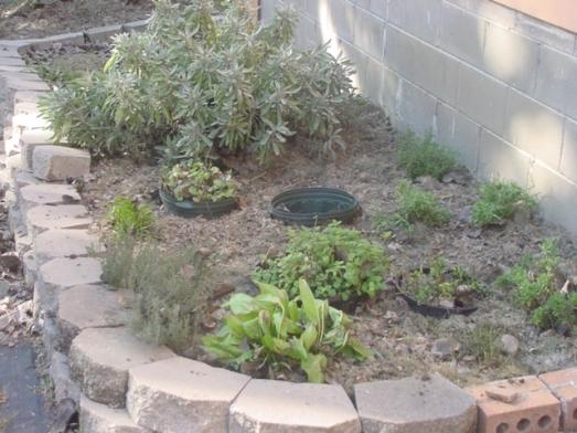 herb garden fall 2009