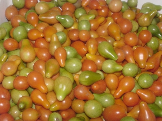 Red Pear Tomatoes-end of season 2009